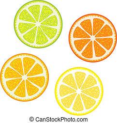 citrus fruits - Vector illustration of Slices of citrus...
