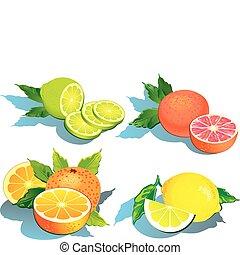 Set of citrus fruits - lemon, orange, grapefruit and lime.