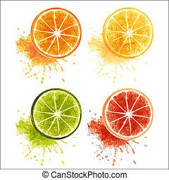 Set of ripe citrus fruits - orange, lemon, lime, grapefruit. EPS10