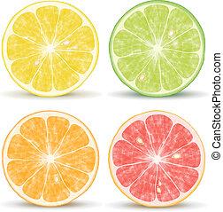Vector citrus fruits: orange, lime, grapefruit and lemon