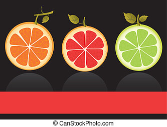 citrus fruits vector - vectors of citrus fruits, contains ...