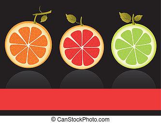 vectors of citrus fruits, contains orange, lemon and grapefruit