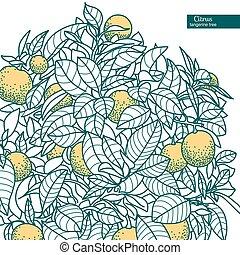 citrus, mandarine, arbre, petit, orange, dessin