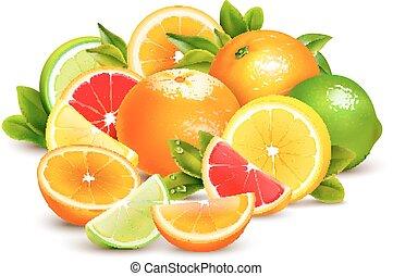 citrus, realistisch, samenstelling, verzameling, vruchten