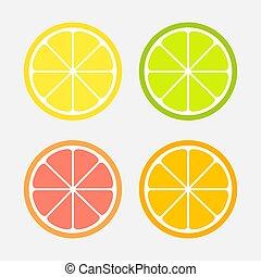 Citrus slices set: lemon, orange, lime and grapefruit.