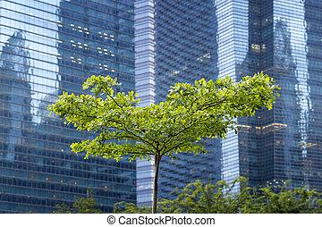 città, albero