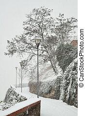 città, percorso, con, lampade stradali, e, albero, in, neve