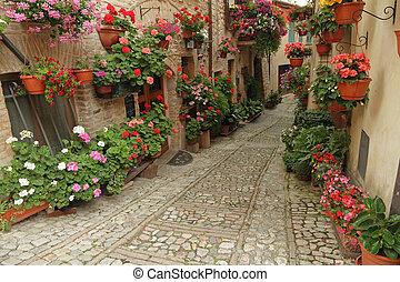 città, poco, vecchio, incredibile, molti, strada, fiori,...