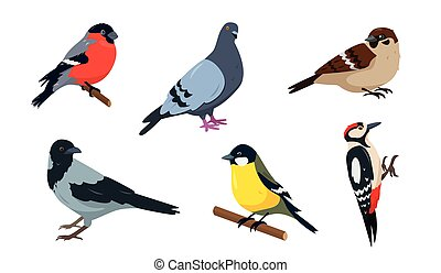 City Birds in different poses isolated