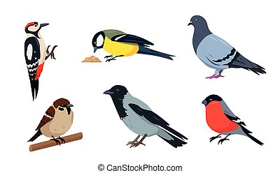 City birds in different poses isolated on white background.