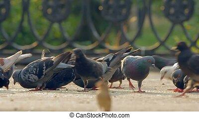 city., duiven, kruimels, eten, vlucht, brood