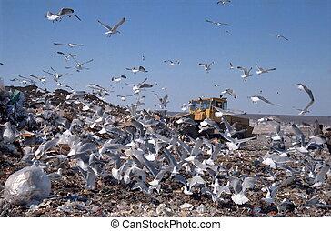 City dump. Gulls.