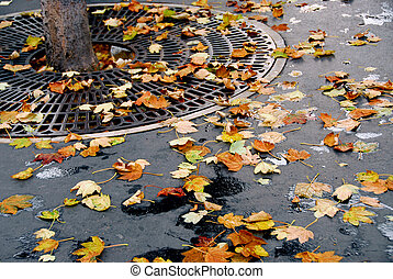 City fall - Fallen leaves on asphalt sidewalk in the city