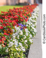 City flowerbed in the park