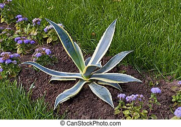 city flowerbed with aloe