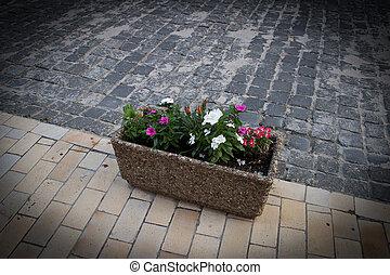 City flowers