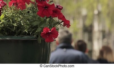 City flowers in flower pot with a busy street on blurred background