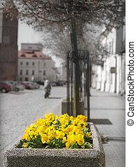 City flowers.
