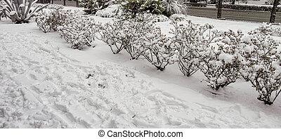city garden under the snow