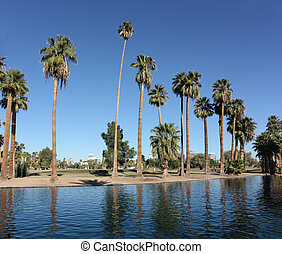 Urban oasis in Encanto park, Phoenix downtown, Arizona