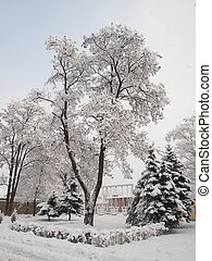 City park after snowfall. Trees covered with snow