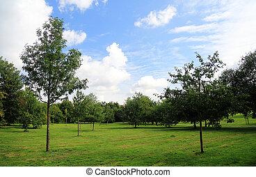 city-park