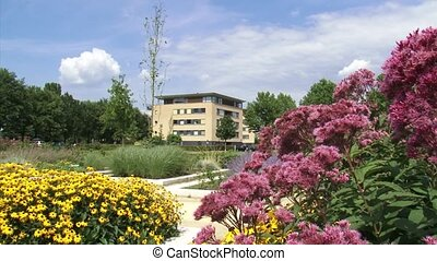 city park, apartment building + pan blooming hemp-agrimony (Eupatorium)