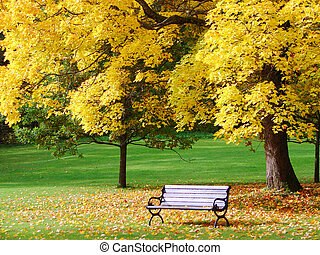 City park in autumn - Bench and maple in city park in the ...