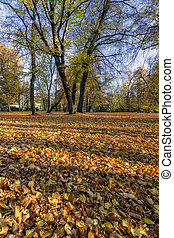 City Park in Autumn