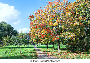 City park in autumn season with colorful foliage