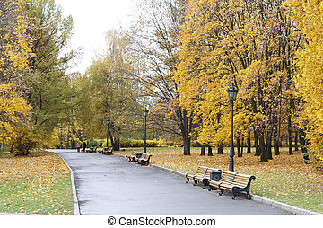 City park in the fall. Benches in the autumn park.