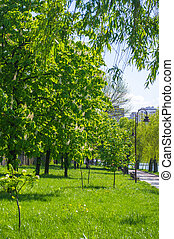 City Park in the spring
