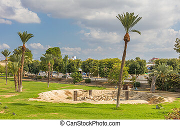 City park with palm trees
