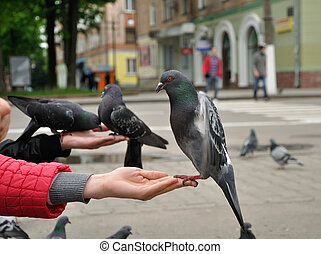 City pigeon on a hand