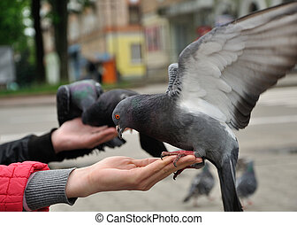 City pigeon sitting on the woman hand