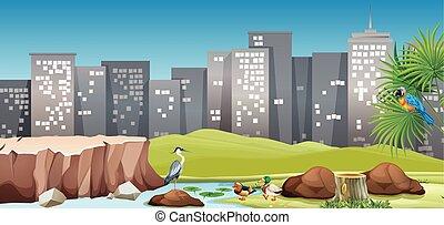 City scene with birds in the park