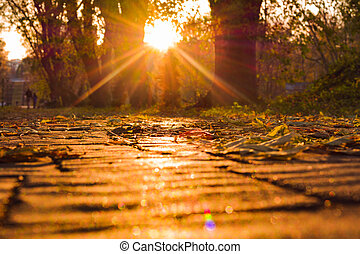 city., soleil, feuilles, beams., automne, trottoir, coucher soleil, baissé