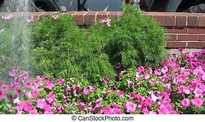 City Watering Flowers in Garden