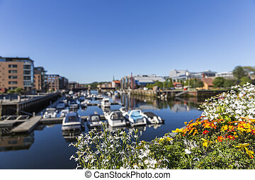 Cityscape of Trondheim with flowers in the foreground