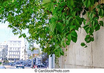 cityscape, sommer, straße, zentrieren, kiev