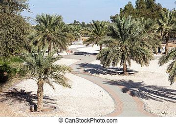 ciudad, emirate, parque, al, árboles, palma, abu dhabi,...
