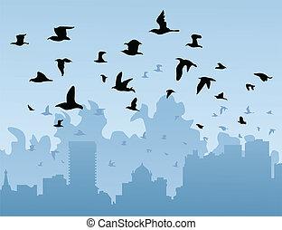 ciudad, encima, aves