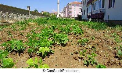 ciudad, jardín, orgánico, horticultura, pasatiempo, ...