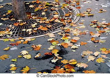 ciudad, otoño