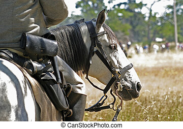 Civil War Horse - Horse and rider during civil war re-...