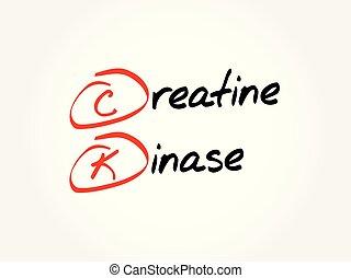 ck, acrônimo, -, kinase, creatine