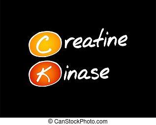 ck, -, kinase, acrônimo, conceito, fundo, creatine