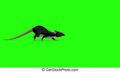 clã©, animation, moucharder, rat, chroma, noir