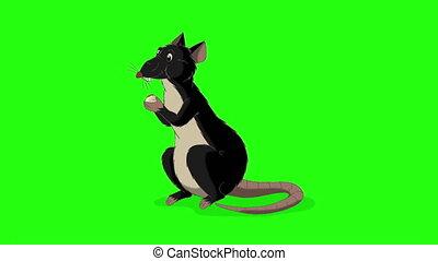 clã©, animation, rampe, fromage, rat, mange, noir, chroma,...