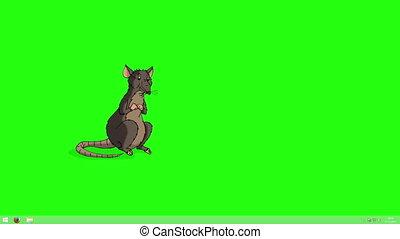 clã©, animation, rat, feuilles, brun, renifle, chroma, vient